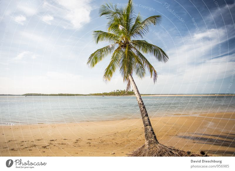 Traumstrand II Himmel Natur Ferien & Urlaub & Reisen blau grün weiß Wasser Sommer Baum Erholung Meer Landschaft Wolken Strand gelb Küste