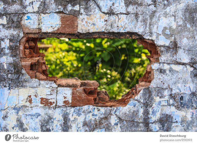 Lückenfüller Pflanze Mauer Wand Fassade blau gelb grün schwarz weiß einzigartig kaputt Loch Strukturen & Formen Riss Altbau Stein Putz Putzfassade rot Baustelle