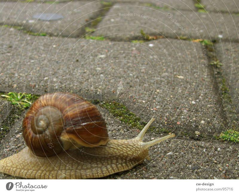 im schneckentempo bis zur 40! Natur grün Tier ruhig Haus Straße Leben Gefühle Gras Stein Haut Beton Geschwindigkeit Ernährung Gelassenheit Spirale