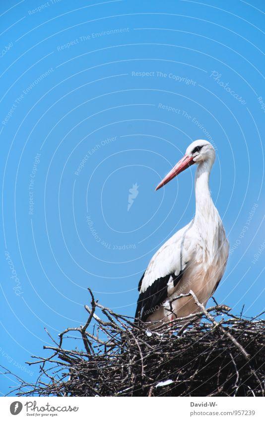 Horch... ein Storch Himmel Natur Sommer Tier Frühling gehen Vogel Luft elegant Wildtier Flügel Baby Dach sportlich Wolkenloser Himmel lang