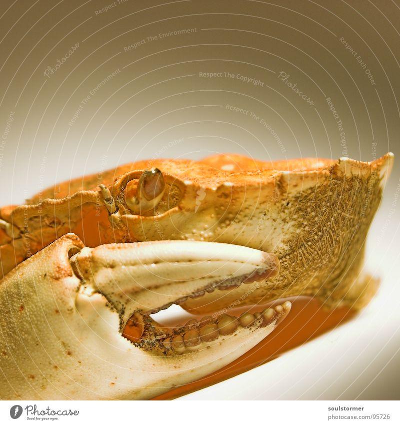 Hunger... Krabbe Meer Tier Ernährung gefährlich böse See Lebewesen Geschwindigkeit klein Panik Fisch Angst Meeresbewohner Lebensmittel bedrohlich Krebstier Auge