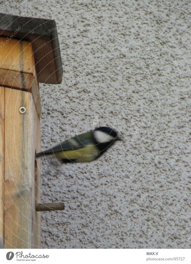 Windeln wechseln Wand Holz Vogel Luftverkehr Abheben Momentaufnahme Futterhäuschen Meisen Tier