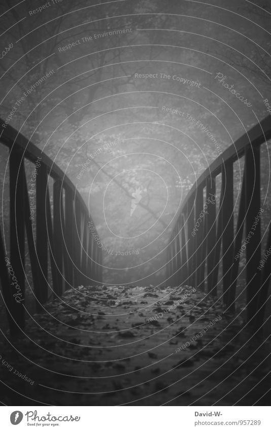 Buchtitel gesucht... Natur dunkel Wald Herbst grau Kunst träumen Angst Nebel wandern Ausflug Brücke Abenteuer lesen Gemälde Filmindustrie