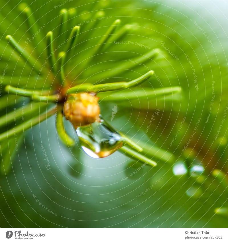 Ein verregneter Tag harmonisch Wohlgefühl Zufriedenheit Sinnesorgane Erholung ruhig Umwelt Natur Wasser Wassertropfen Sommer schlechtes Wetter Unwetter Sturm