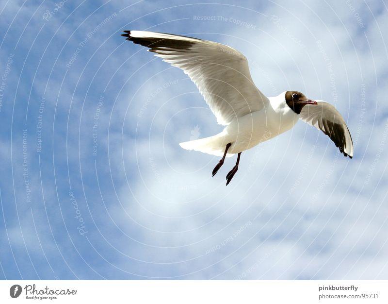 Fly up to the Sky... II Himmel weiß Meer blau Sommer Strand Ferien & Urlaub & Reisen Wolken Erholung Freiheit See Luft Beine braun Vogel Küste