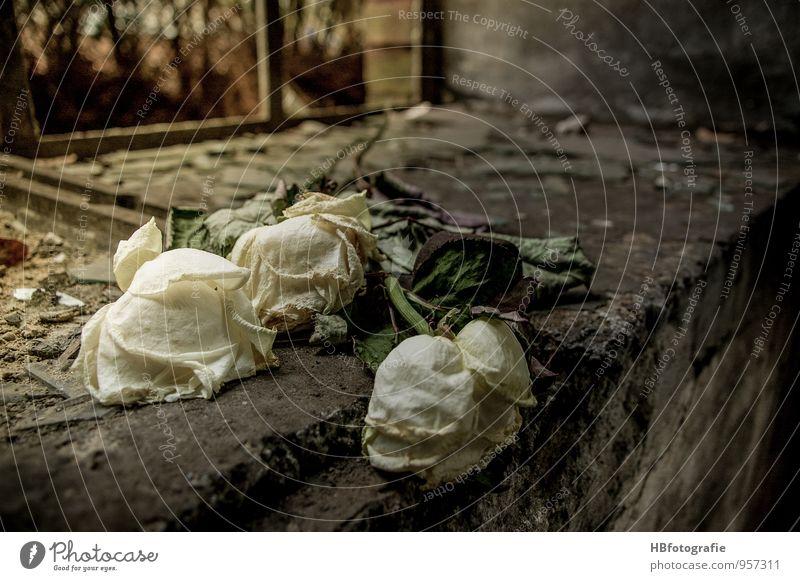 Vergessen Fenster Blumenstrauß weiß Gefühle Hoffnung Traurigkeit Trauer Tod Liebeskummer Verfall Vergänglichkeit morbid Rose vergessen welk Farbfoto