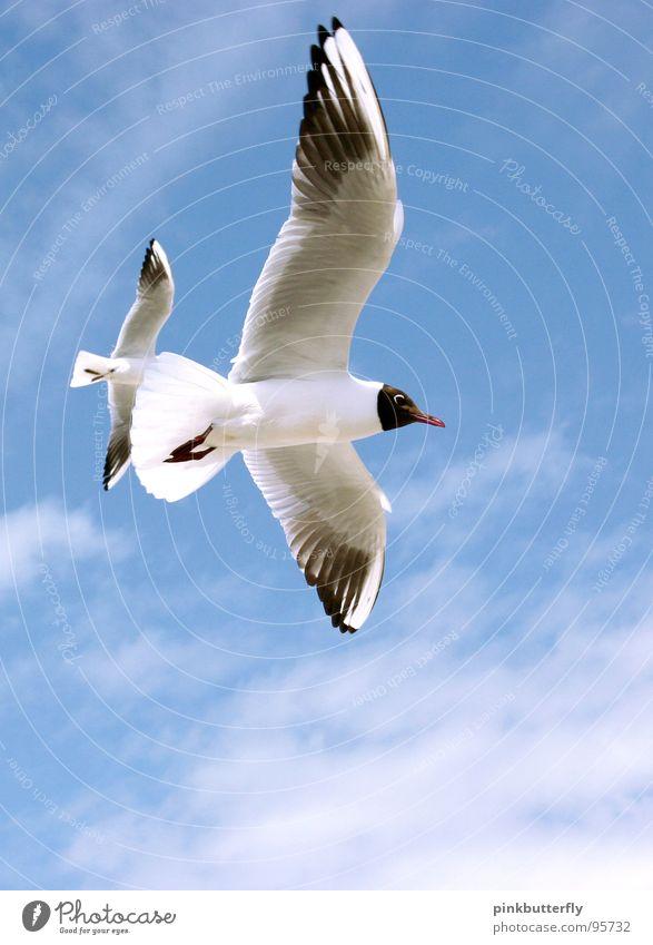 Fly up to the Sky... II Möwe Vogel Luft Schweben Sommer See Meer Küste Ferien & Urlaub & Reisen weiß braun Erholung Strand Wolken Fächer Beine Froschperspektive