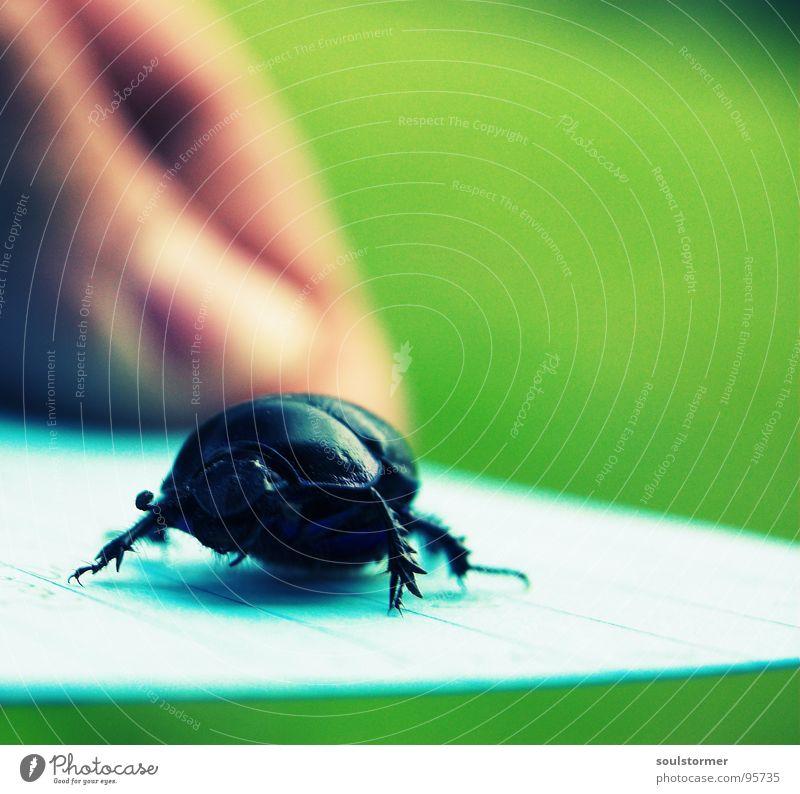 Panzer hat Klebefüße... Insekt Flucht gepanzert Panik Papier Gemälde Quadrat Cross Processing Makroaufnahme Nahaufnahme Käfer laufen Beine Arme Flügel Angst