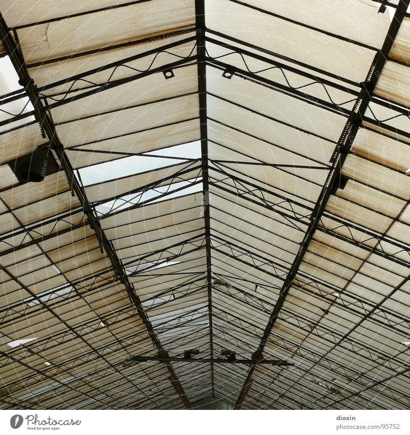 Glashaus alt Haus Einsamkeit Fenster Gebäude Metall dreckig Architektur Glas leer Dach kaputt verfallen Landwirtschaft Verfall