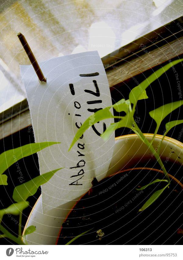 EIGENGEWÄCHS [UND AB IN DIE A-ELF] Natur Wasser grün Pflanze Fenster Wärme klein Garten Luft Gesundheit Erde Kraft Wohnung Frucht Wachstum Ernährung