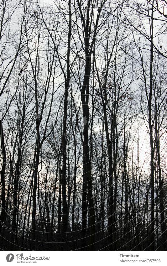 Novemberwald. Umwelt Natur Pflanze Sonnenlicht Herbst Schönes Wetter Wald Holz ästhetisch dunkel einfach natürlich grau schwarz Gefühle Ast Zweige u. Äste kahl