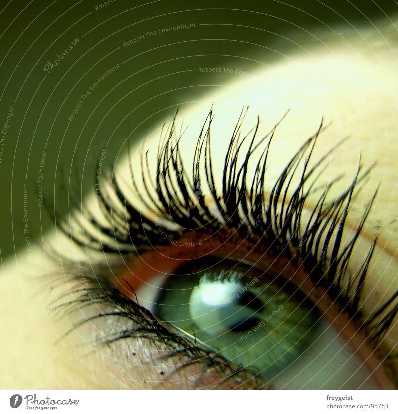 Green Eye grün Gesicht Auge See Wimpern Makroaufnahme Pupille Regenbogenhaut