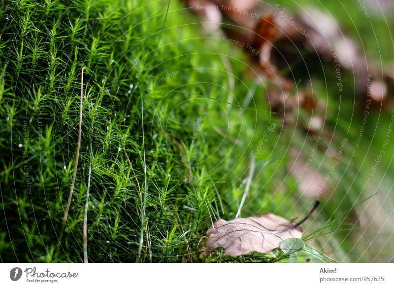 Grüner Herbst Natur Pflanze Gras Sträucher Moos Grünpflanze Wald standhaft Erholung Leben ruhig grün feucht Blatt Makroaufnahme Ausdauer herbstlich Farbfoto