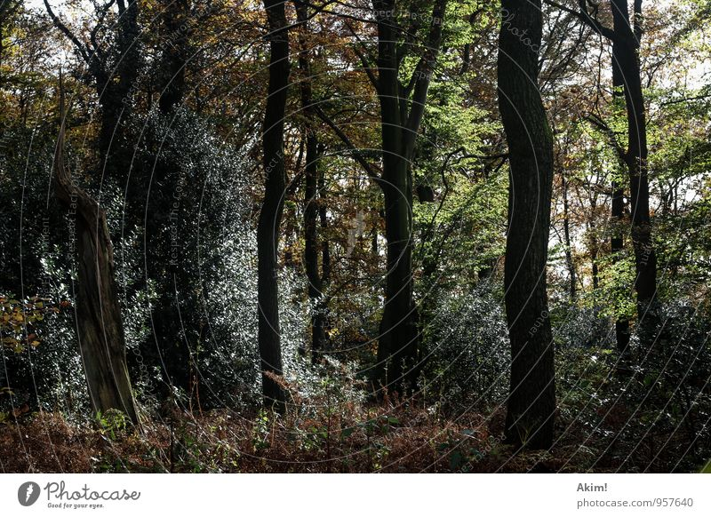 Lost Umwelt Natur Landschaft Pflanze Frühling Baum Wald wild Angst Wege & Pfade Vielfältig Jahreszeiten herbstlich Herbst Waldstimmung verloren Forstwirtschaft