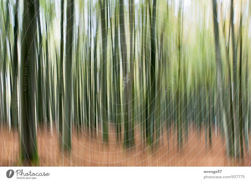 Kein Tannenwald Natur Pflanze Herbst Baum Laubbaum Buche Wald braun grün Buchenwald Bewegungsunschärfe Baumstamm Nationalpark Jasmund Experiment Unschärfe