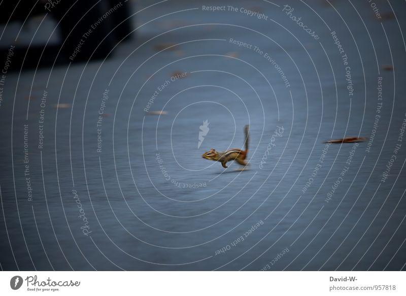 Augen auf im Straßenverkehr Umwelt Autofahren Verkehrsunfall Fahrzeug Tier Wildtier Totes Tier Fell Pfote Streifenhörnchen Eichhörnchen squirrel Tierjunges