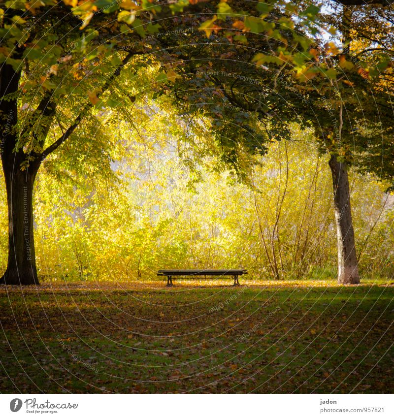 ein platz an der sonne. Natur Pflanze Sonne Baum Erholung Blatt ruhig gelb Wärme Herbst Wiese Gras Garten Park Erde Kraft