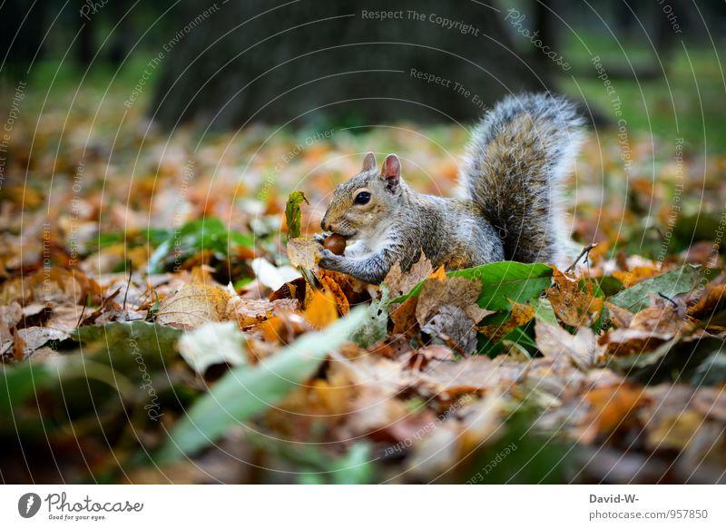 bestens gewappnet Natur schön Blatt Tier Winter Wald Herbst Glück Essen braun Park Wildtier genießen Neugier Fell Appetit & Hunger