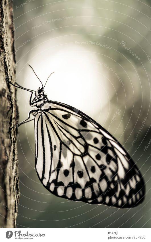 Fliegen will er dann auch noch... Natur Erholung Tier Wildtier authentisch genießen fantastisch einfach nah Schmetterling Überraschung ruhend