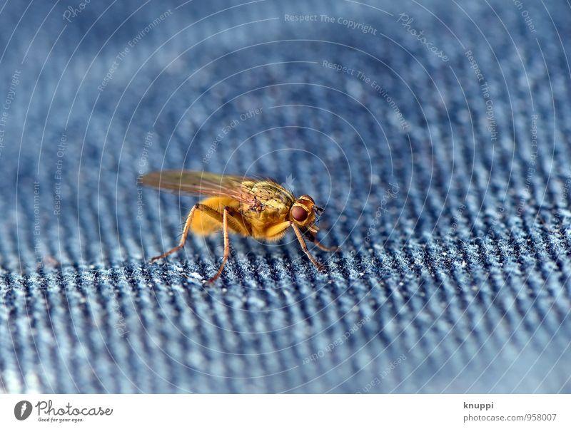 Die Fliege! Natur blau schön Sommer Sonne rot Tier gelb Wärme Frühling natürlich klein außergewöhnlich hell wild Wildtier