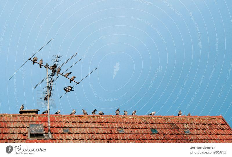 Tauben bei der Rast Vogel Dach Antenne Pause Sommer Himmel Schwarm