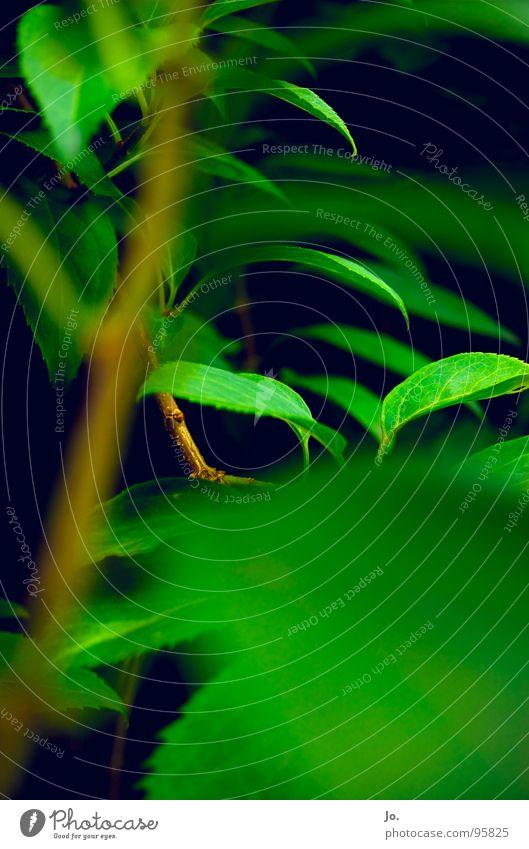 Es grünt so grün Pflanze schwarz Sträucher Baum Kontrast Natur Garten