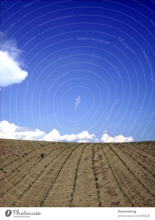 am Horizont wandern die Wolken Umwelt Natur Landschaft Pflanze Erde Himmel Frühling Schönes Wetter Dürre Nutzpflanze Feld stehen Wachstum Unendlichkeit klein