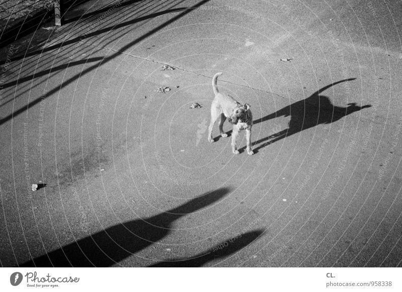 kleiner hund ganz groß Freizeit & Hobby Mensch 2 Verkehrswege Fußgänger Wege & Pfade Fußweg Tier Hund Schwanz 1 Zaun Schattenspiel gehen warten Tierliebe Treue