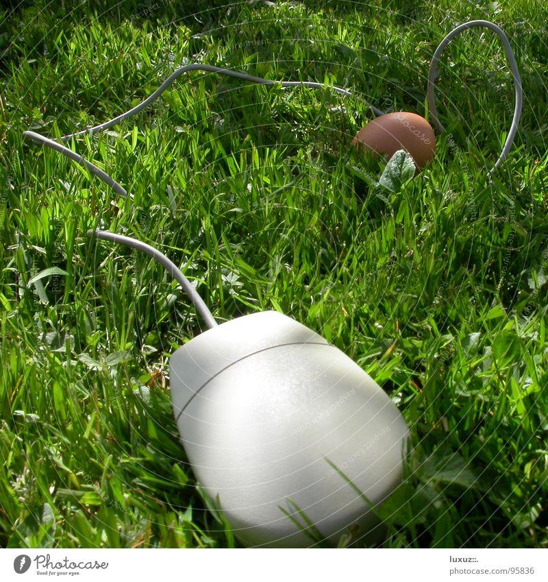 Ei Mac Computermaus Gras Technik & Technologie Wissenschaften Kommunizieren Kabel Rasen cable grass
