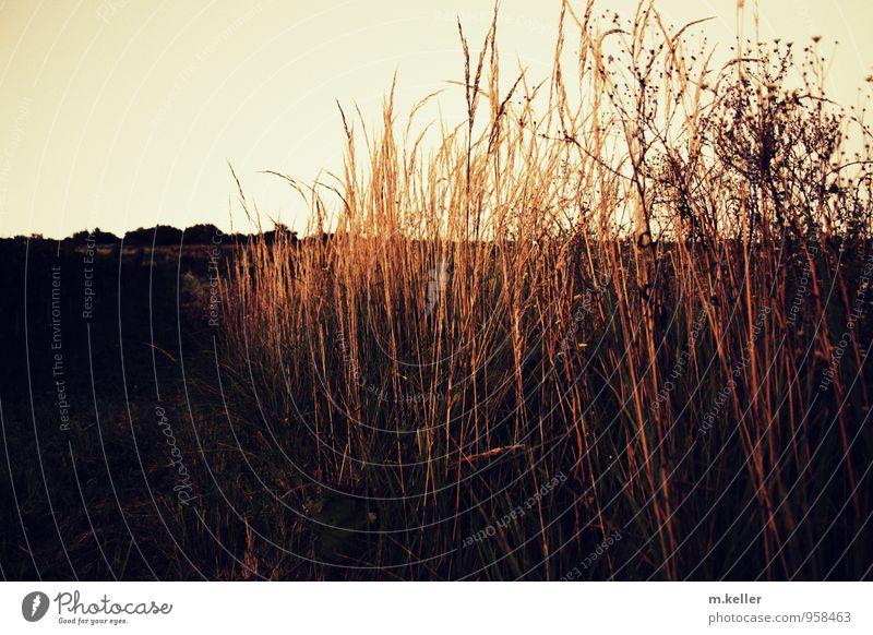 abend Landschaft Pflanze Garten wild weich Hoffnung Glaube Abenteuer Beginn Erholung Horizont Idee Identität schön Wunsch Dämmerung