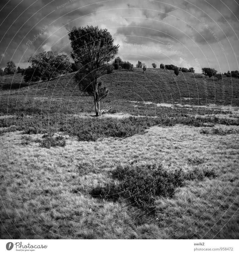 Geest Ausflug Ferne Umwelt Natur Landschaft Pflanze Himmel Wolken Horizont Baum Sträucher Wildpflanze Heidekrautgewächse Hügel Naturschutzgebiet