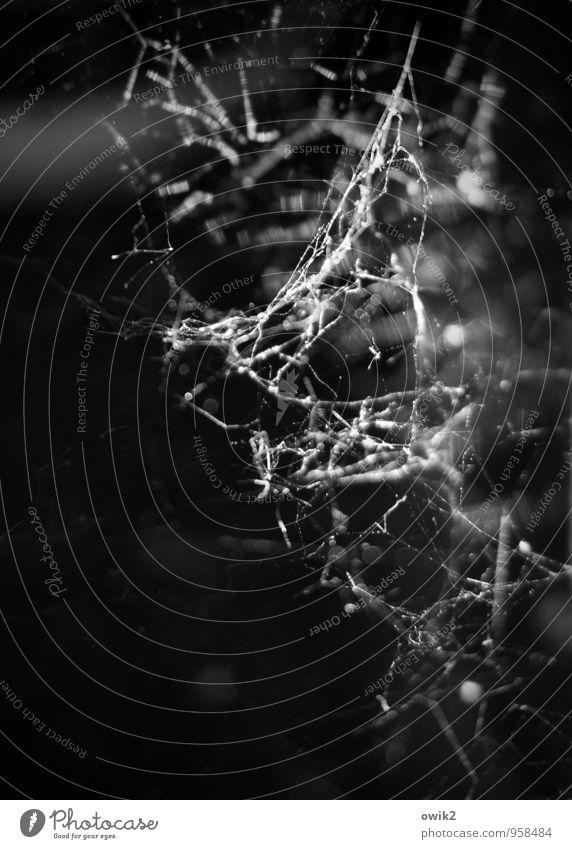 Gewebe Umwelt dünn authentisch fest klein nah beweglich Spinnennetz Spinngewebe dunkel Schwarzweißfoto Außenaufnahme Nahaufnahme Detailaufnahme Makroaufnahme