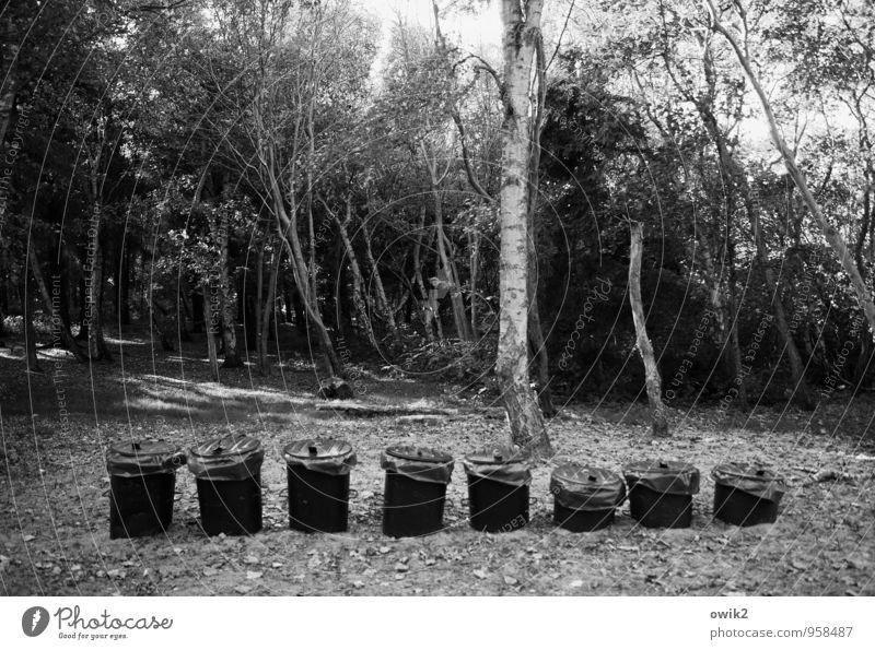Oktett Natur Pflanze Baum Landschaft Umwelt Sand Zufriedenheit Ordnung stehen Sträucher warten Konzentration Langeweile stagnierend Rätsel Ausdauer