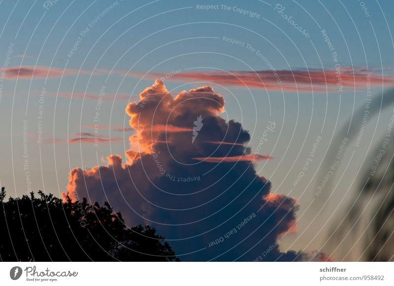 Cumulus Congestus für Mädchen Himmel blau Wolken Umwelt außergewöhnlich rosa Wetter Sträucher Klima Schönes Wetter Klimawandel schlechtes Wetter Gewitterwolken