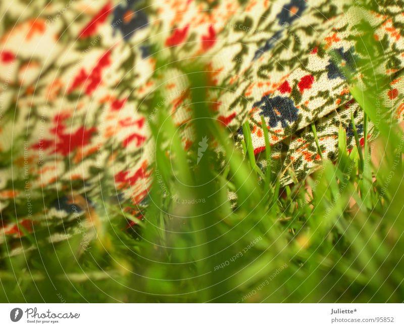 Blumenwiese??? Natur grün Sommer Freude Farbe Wiese frisch