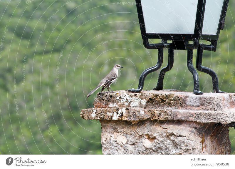 Karibiklerche Tier Vogel Flügel 1 außergewöhnlich Lampe Sims Pfosten Metallfeder Feder exotisch Außenaufnahme Menschenleer Textfreiraum links