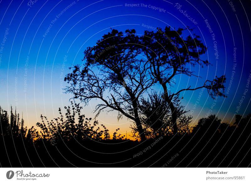 Blaue Stunde Baum Verlauf Blatt Sträucher Sonnenuntergang Stimmung Färbung Farbe Dämmerung Siluette Ast Stäucher Himmel