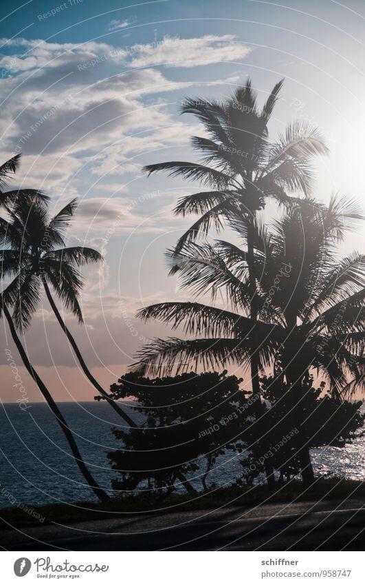 Sonnenanbeter II Umwelt Natur Pflanze Grünpflanze exotisch Wellen Küste Strand Meer Klischee Palme Palmenwedel Palmenstrand Palmentapete