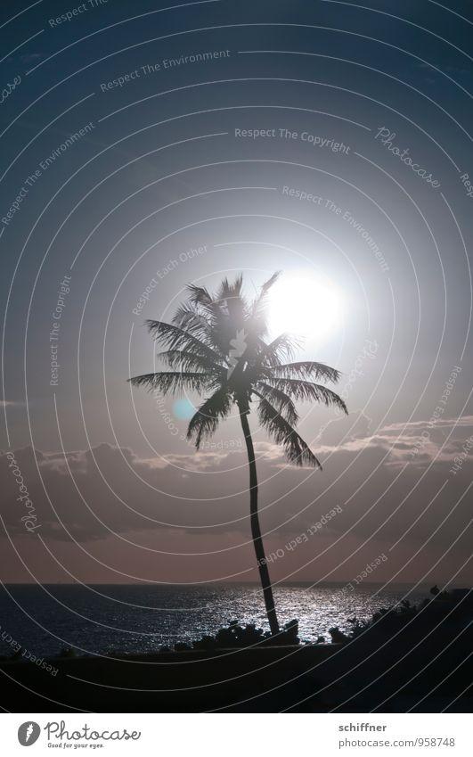 Sonnenanbeter, alleine Umwelt Natur Landschaft Himmel Wolken Klima Klimawandel Wetter Schönes Wetter Pflanze Baum exotisch Meer Klischee Palme Palmentapete
