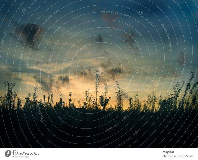 Sommerabend Stimmung Wiese Sonnenuntergang Blumenwiese Gras Romantik Wolken Himmel Abend Unkraut