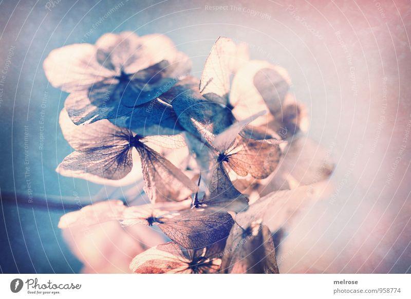 sanft Natur blau Pflanze Blatt ruhig Wald Herbst Gefühle Blüte Stil außergewöhnlich braun Kunst rosa träumen Feld
