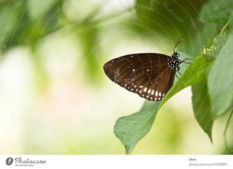 Rastplatz schön grün Sommer Erholung Blatt Tier gelb natürlich sitzen einzigartig Pause Insekt Schmetterling Erwartung