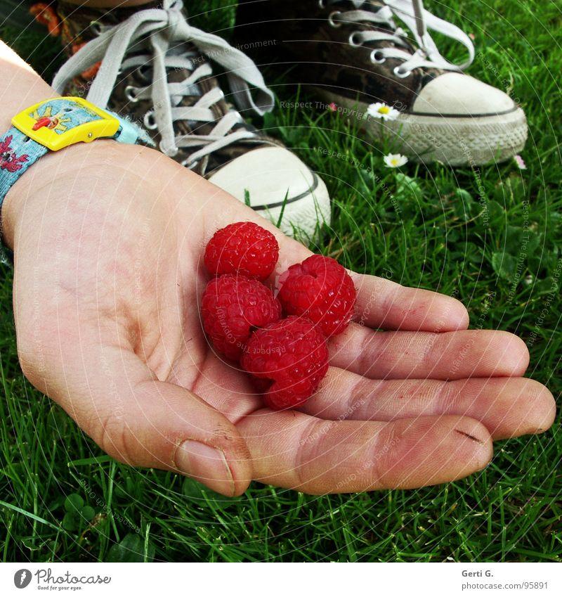 Himbeerchen Himbeeren 4 gepflückt rot Hand anbieten Präsentation Finger Schuhe Chucks Gras Wiese grün Gänseblümchen Frucht Sommer raspberry raspberries