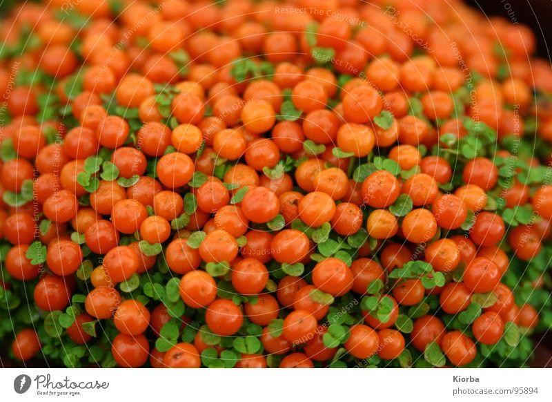 Perlen der Natur schön grün Pflanze Garten Park orange geschlossen Sträucher Aussehen Gift Halt Abhängigkeit