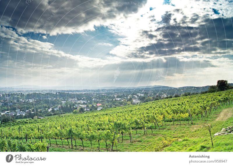 Sonnenstrahlen über Wien Umwelt Natur Landschaft Pflanze Himmel Wolken Horizont Sonnenlicht Herbst Wetter Gras Sträucher Nutzpflanze Hügel Österreich Haus hell