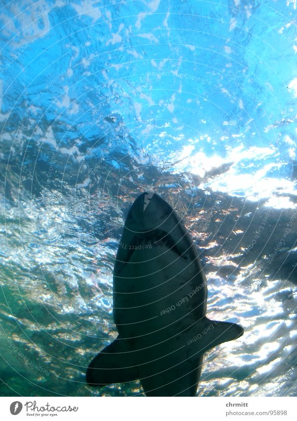 Ragged Tooth Shark 2 Oceans Aquarium Cape Town Wasser Meer Fisch London Underground Atlantik Südafrika Kapstadt