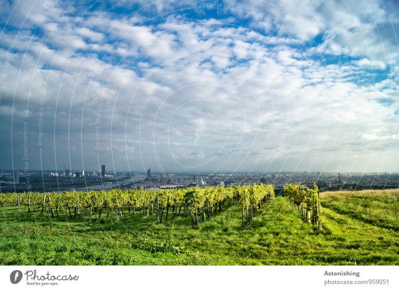 Ausblick auf Wien Umwelt Natur Landschaft Pflanze Luft Himmel Wolken Horizont Herbst Wetter Schönes Wetter Gras Sträucher Nutzpflanze Wiese Hügel Fluss Donau
