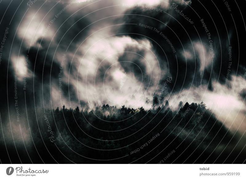 Schwarz-Wald Natur Landschaft Pflanze Urelemente Wolken Sonnenlicht Herbst schlechtes Wetter Baum Tanne Hügel Berge u. Gebirge bedrohlich dunkel elegant kalt