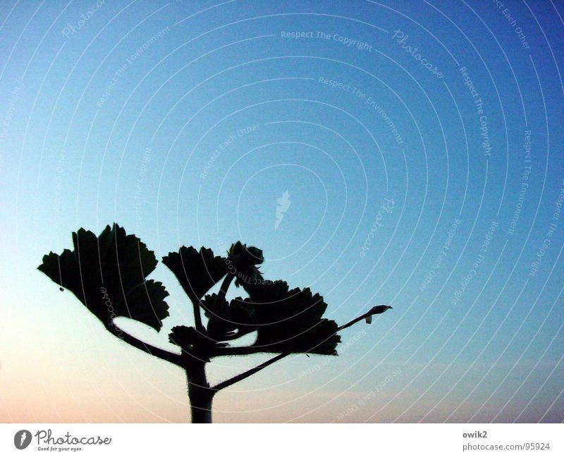 Guten Morgen, Geranie Natur Pflanze blau Blatt Ferne schwarz Blüte rosa Wachstum Dekoration & Verzierung Blühend Klima Schönes Wetter Wandel & Veränderung Hoffnung Neugier