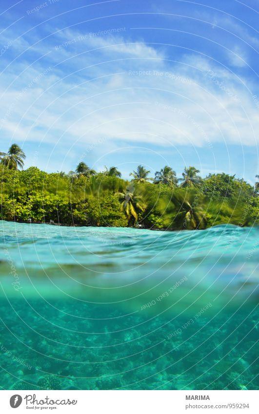 Underwater World Maldives, island and heaven exotisch ruhig Ferien & Urlaub & Reisen Tourismus Meer Insel tauchen Umwelt Natur Tier Wasser Riff Korallenriff